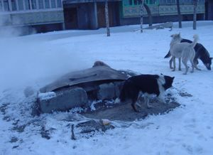dogs-staying-warm-dalnerechensk-russia.jpg